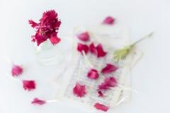 Enkel kryddnejlika i en vas med röda kryddnejlikakronblad på legitimationshandlingar för ett skönhetrecept som isoleras, slut upp fotografering för bildbyråer