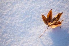 Enkel lönnlöv på snön fotografering för bildbyråer