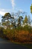 Enkel lampa bredvid de nästan nakna träden Royaltyfri Foto