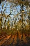 Enkel lampa bredvid de nästan nakna träden Fotografering för Bildbyråer