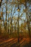Enkel lampa bredvid de nästan nakna träden royaltyfri fotografi