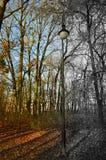 Enkel lampa bredvid de nästan nakna träden - halvt svartvitt Royaltyfri Bild