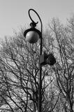 Enkel lampa bredvid de svartvita nästan nakna träden - arkivfoto