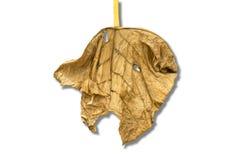 enkel leaf Royaltyfria Bilder