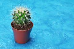 Enkel liten grön kaktus i brun blomkruka med kopieringsutrymme royaltyfria bilder