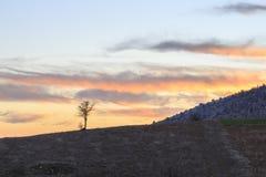 Enkel naken trädkontur under solnedgång på torosberg Royaltyfri Fotografi