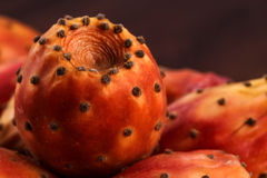Enkel nopal- eller kaktusmakro Royaltyfri Foto