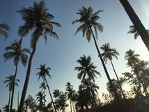 Enkel palmen Royalty-vrije Stock Foto