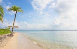 Enkel palmträd i exotisk tropisk strand Royaltyfri Fotografi