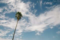 Enkel palmträd mot himmel royaltyfri bild