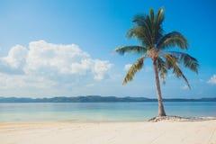 Enkel palmträd på den tropiska stranden Arkivfoton