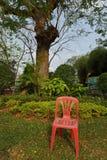 Enkel röd plast- stol framme av ett träd i en parkera Arkivbild