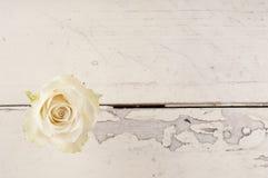 Enkel röd ros över vit träbakgrund Fotografering för Bildbyråer
