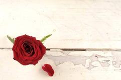Enkel röd ros över vit träbakgrund Royaltyfri Foto