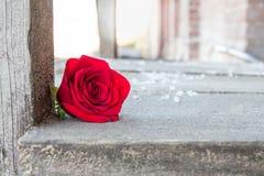 Enkel röd ros på en träplattform Fotografering för Bildbyråer