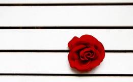 Enkel röd ros ut ur det vita trästaketet royaltyfria foton