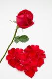 Enkel röd roshjärtaform på vit bakgrund Arkivfoton