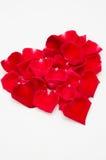 Enkel röd roshjärtaform på vit bakgrund Royaltyfri Foto