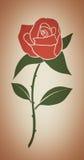 enkel redrose royaltyfria foton