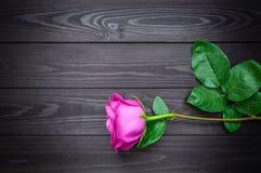 Enkel ros på en mörk träbakgrund kopiera avstånd royaltyfri fotografi