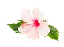 japansk spa rosa sidor