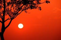 enkel solnedgång Arkivbilder