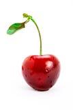 enkel stem för Cherry fotografering för bildbyråer