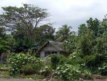 Enkel stuga i en djungel Royaltyfria Bilder
