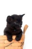 enkel svart kattunge för korg Royaltyfri Foto
