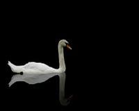enkel swan för reflexion royaltyfria foton