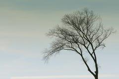Enkel träd-överkant i himlen arkivbild