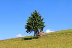 enkel tree Royaltyfri Fotografi