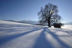 enkel tree Royaltyfri Foto