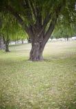 enkel tree fotografering för bildbyråer