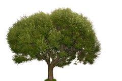 enkel tree Arkivbilder