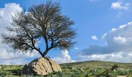 enkel tree Royaltyfria Bilder