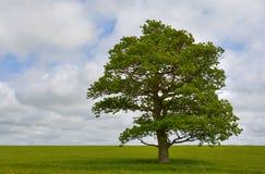 enkel tree arkivbild