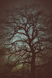 enkel tree för afton arkivbild