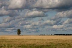 enkel tree för fält royaltyfri foto