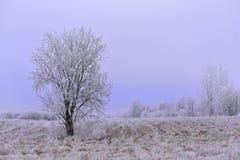 enkel tree wintertime royaltyfri bild