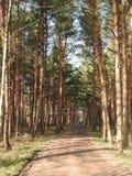 Enkel väg i skogen, Litauen Arkivfoto