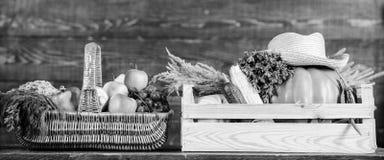 Enkel van tuin Het concept van de kruidenierswinkelwinkel De verse groenten van de leveringsdienst van landbouwbedrijf Koop verse stock afbeelding