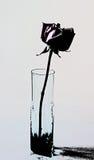 enkel vase för exponeringsglasrose royaltyfri foto