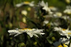 Enkel verblijf Vlinder stock fotografie