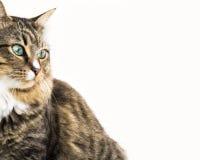 Enkelhet av katten Arkivfoton