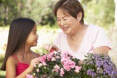 Enkelin und Großmutter, die zusammen im Garten arbeiten Lizenzfreie Stockfotos