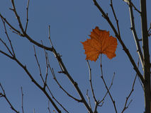 Enkelt blad på treetop Arkivfoto