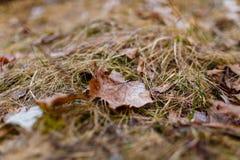 Enkelt blad som ligger på närbild för torkat gräs royaltyfri foto