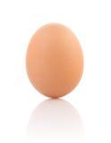enkelt brunt ägg Royaltyfri Bild