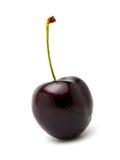 enkelt Cherry Royaltyfria Foton